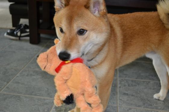 The neph-dog!